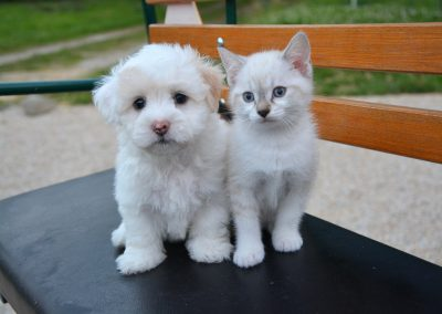 Breeders and Rescue Puppy/Kitten Fosters