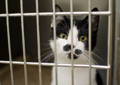 Animal Shelter & Rescue Staff/Volunteers