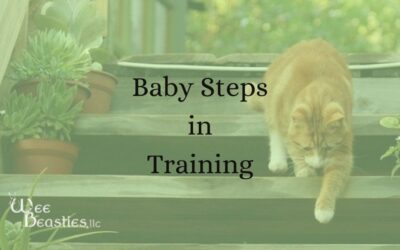 Baby Steps in Training