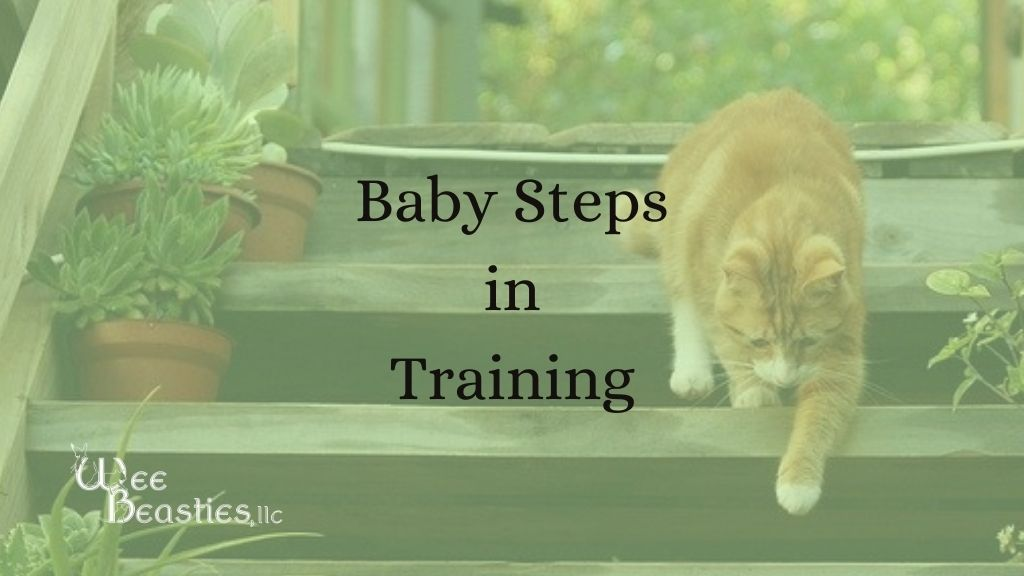 orange cat walking down stairs with Baby Steps in Training written next to it