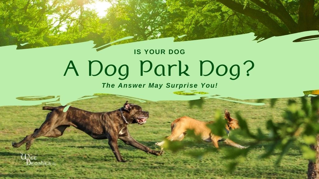 """Two dogs playing in a dog park with """"Is your dog a dog park dog?"""" on top"""